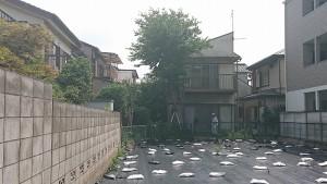 和田邸樹木伐採1