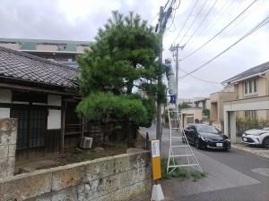 飯田邸植木1